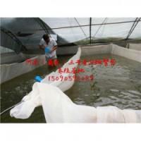 临沂市哪里有泥鳅苗养殖场